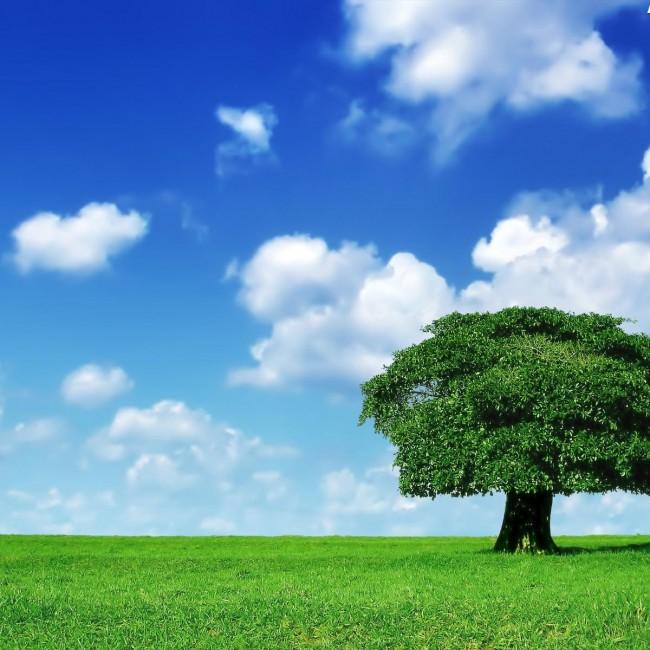 bulut-lone_tree_1600